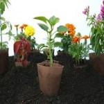 eco-friendly-seedling-pots