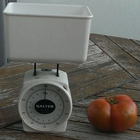 tomato-guess-weight