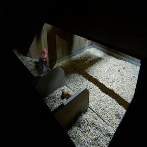 solar-chicken-coop-light