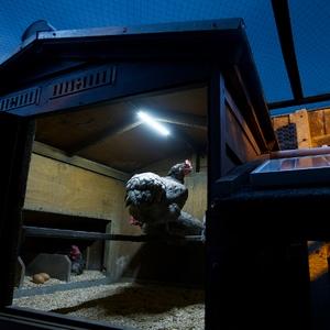 chicken-coop-lighting-system-jpg