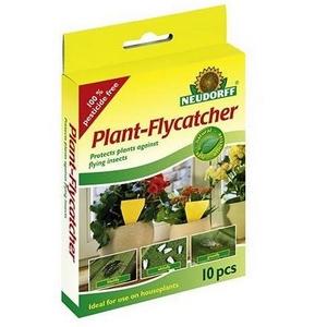 plant-flycatcher-jpg