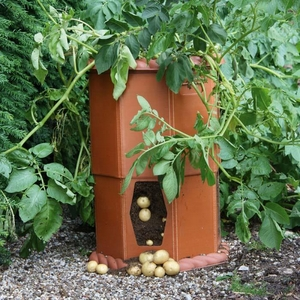 urban-potato-growing
