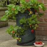 pop-up-strawberry-planter