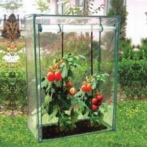 tomato-growhouse-1427124638-jpg